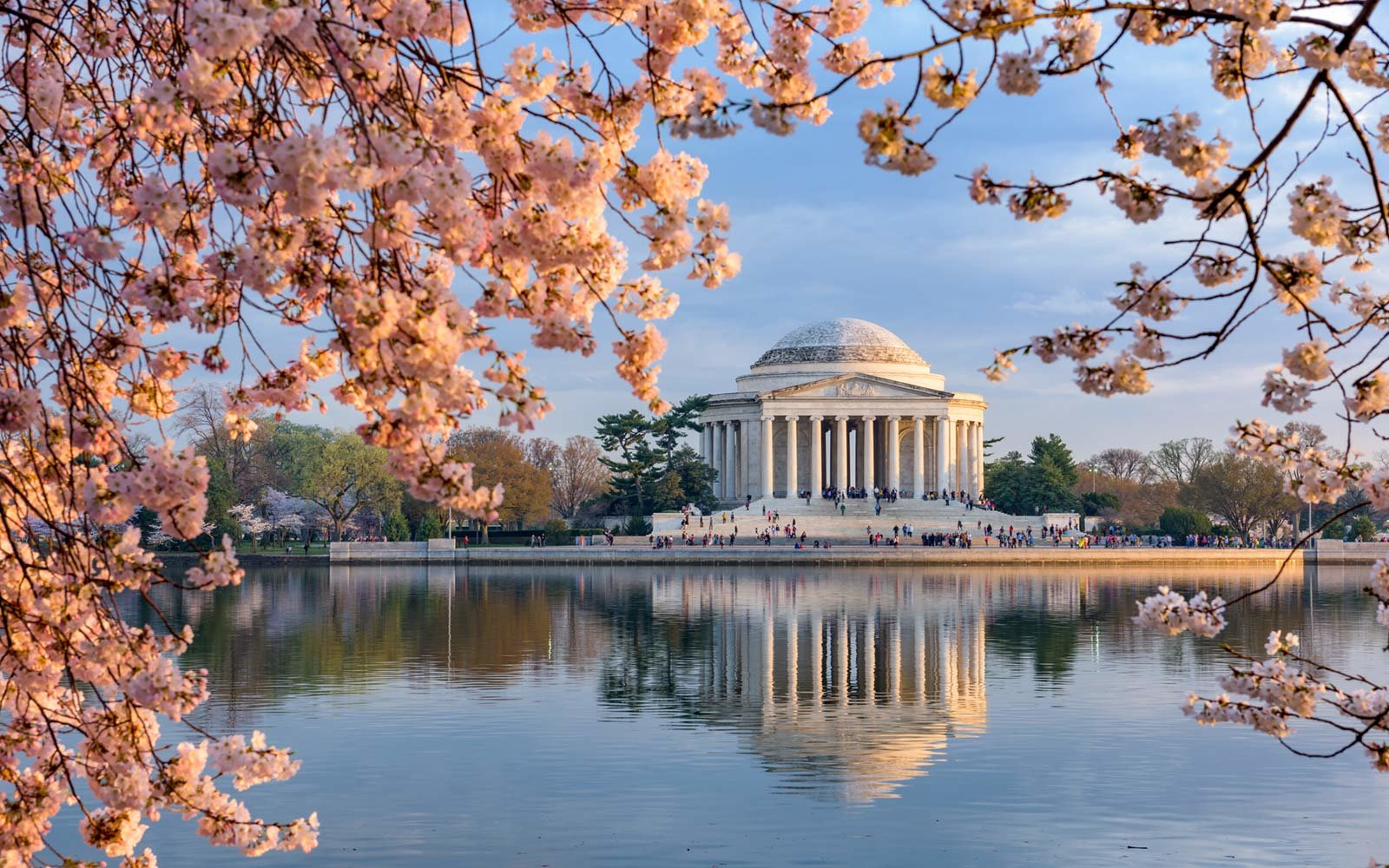 Cherry Blossoms at Jefferson Memorial in Washington, D.C.
