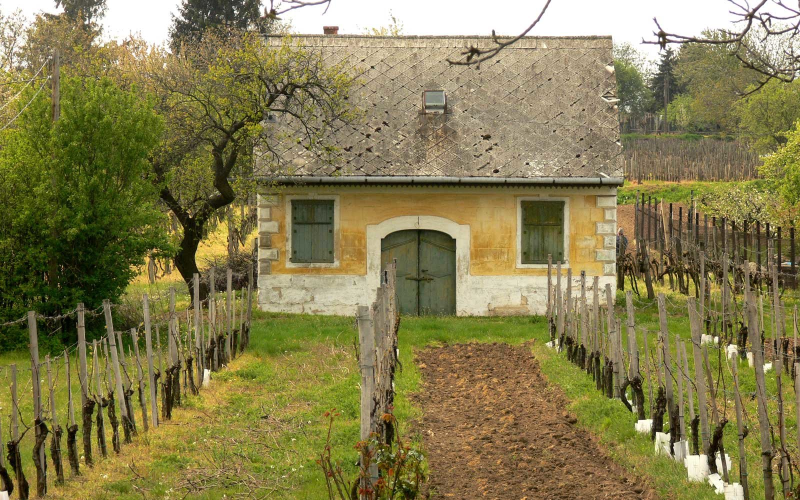 House at a vineyard in Etyek, Hungary