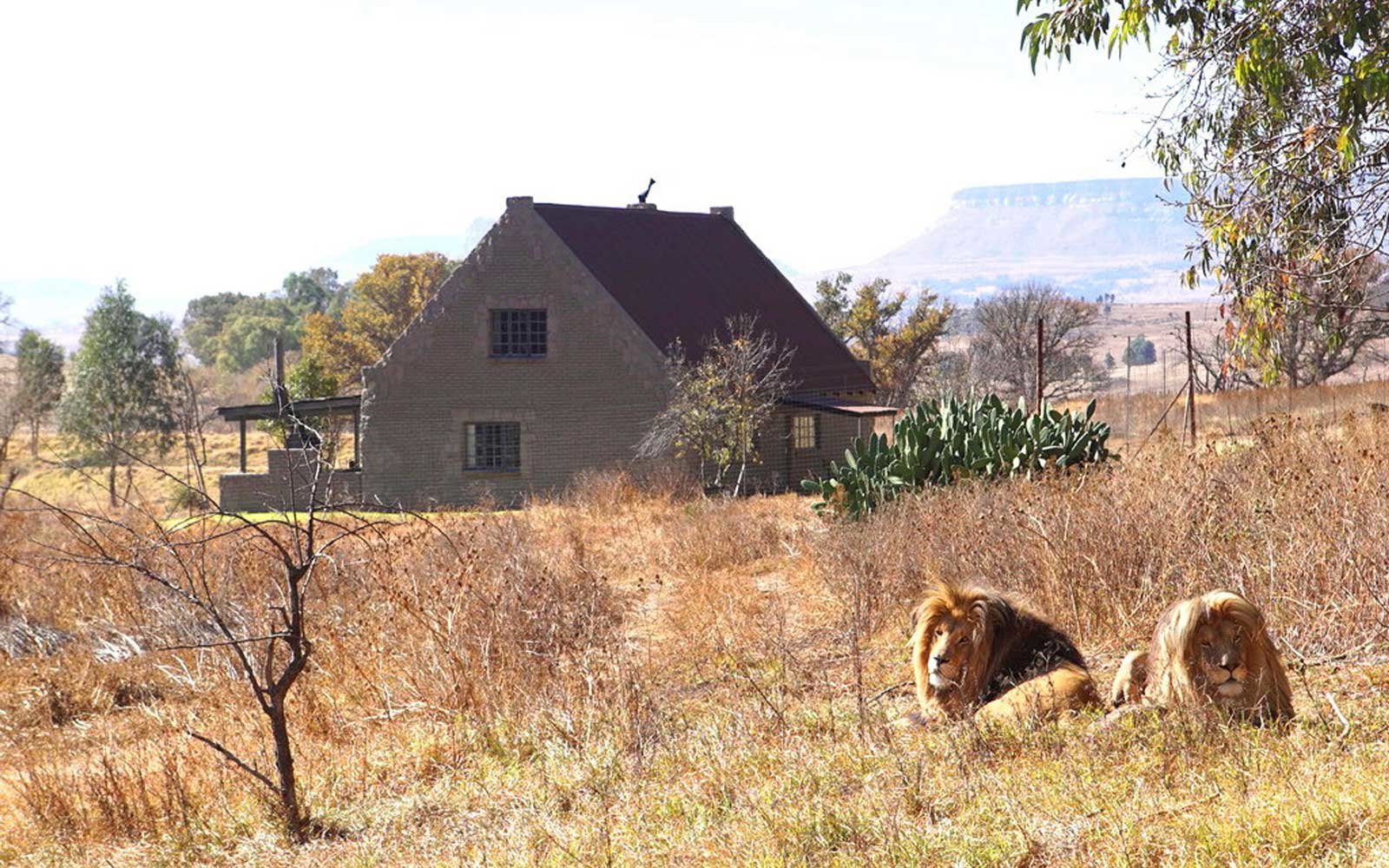 Lion House at GG Conservation