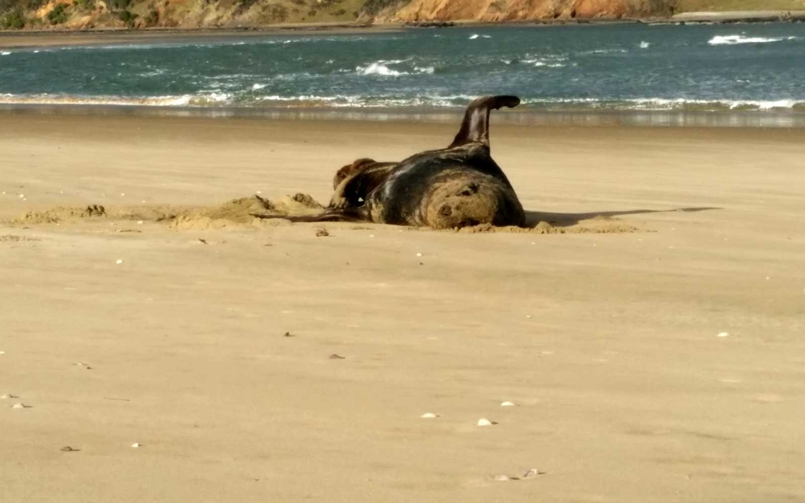 National Institute of Water & Atmospheric Research Ltd (NIWA) found Vacation Photos in Sea Lion feces