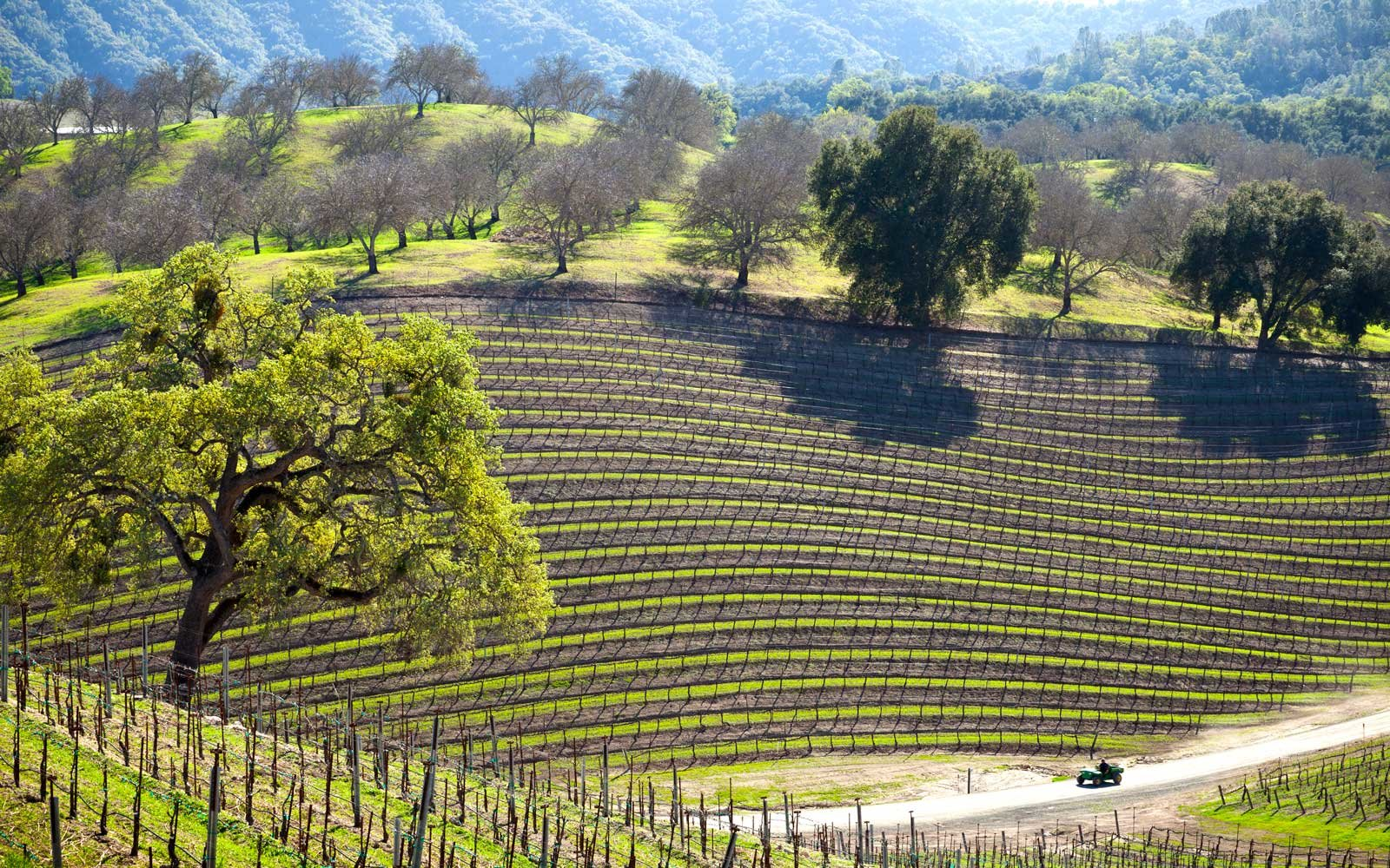 Long Weekend Getaways - Paso Robles, California