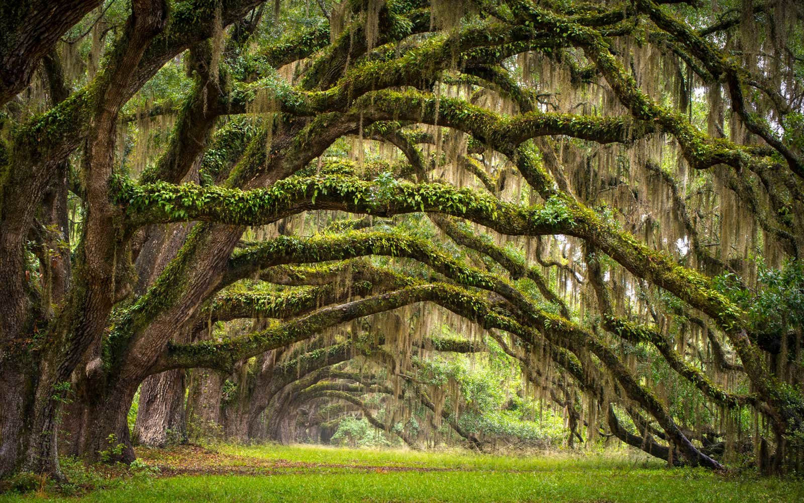Avenue of Oaks, Charleston, South Carolina