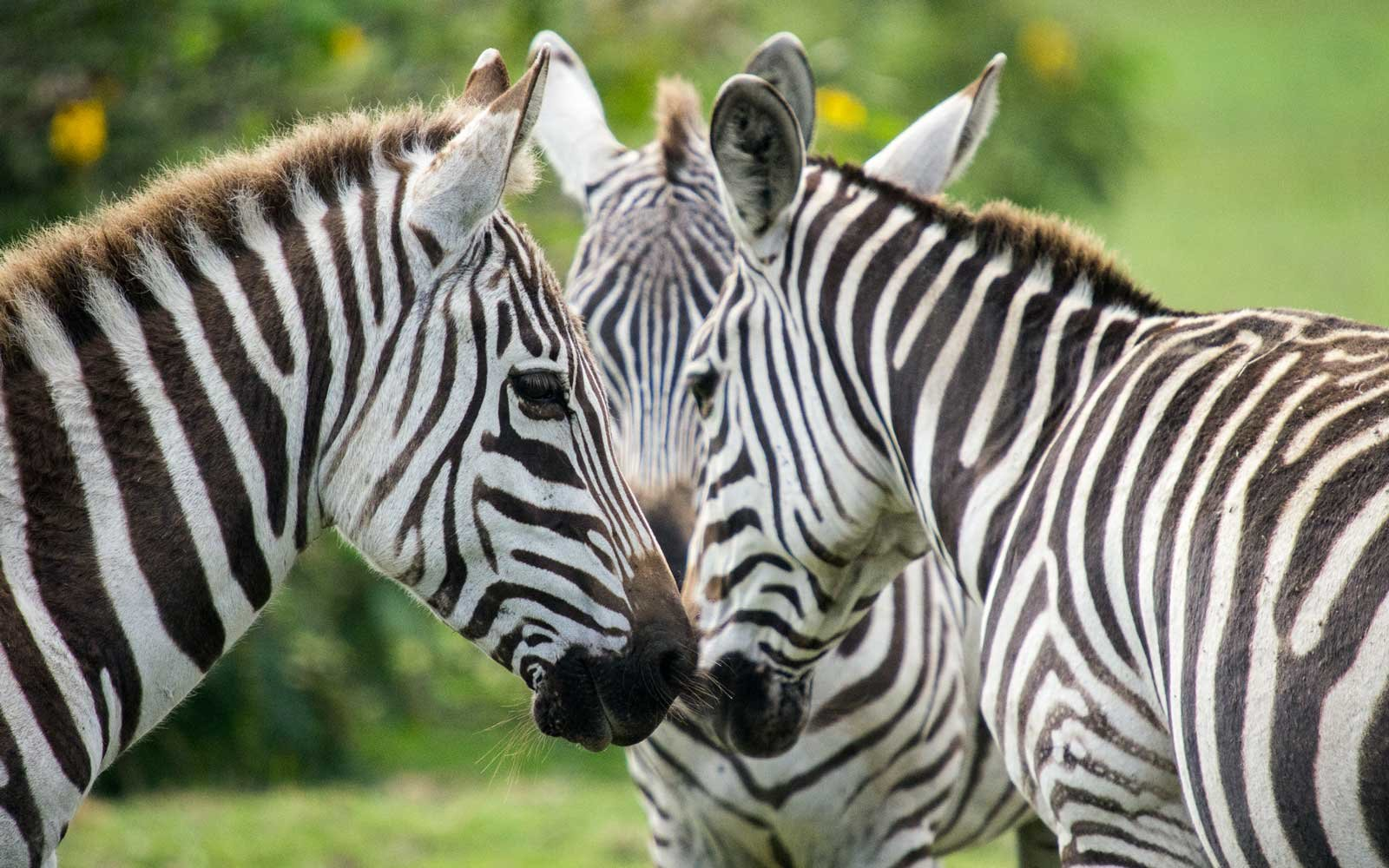 This Is Why Zebras Have Stripes — and Why You Should Wear ...