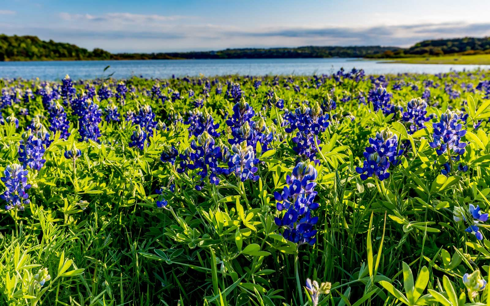 Texas May See Its Biggest Wildflower Bloom in a Decade