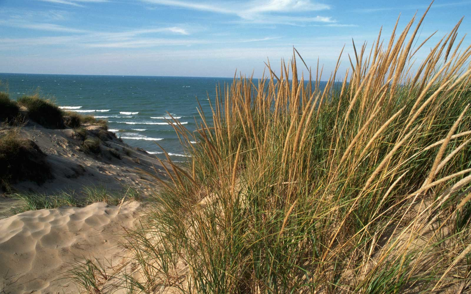 Grass at Indiana Dunes National Park