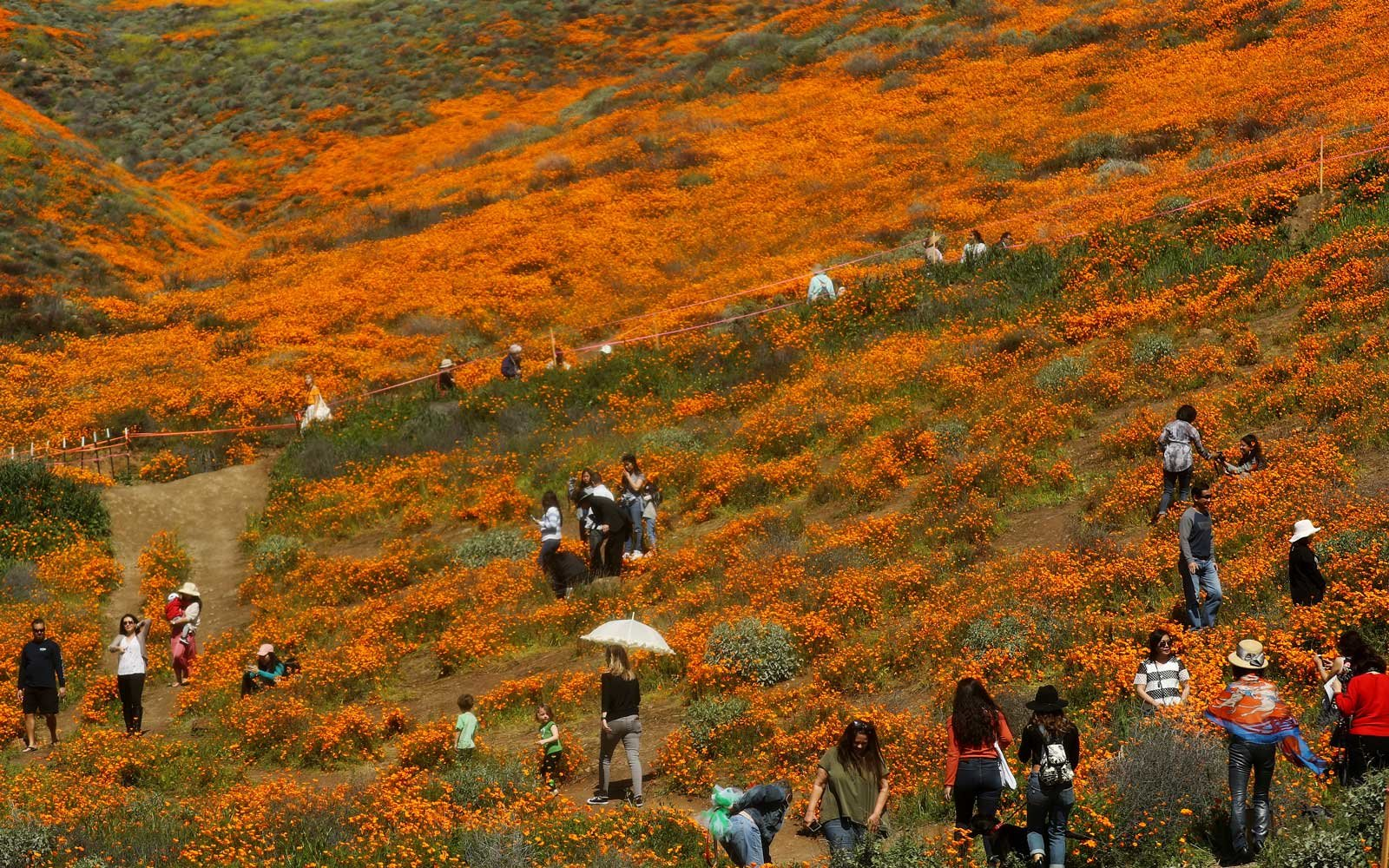 Flower-crazed Tourists and Instagrammers Cause 'Super Bloom Apocalypse' in California