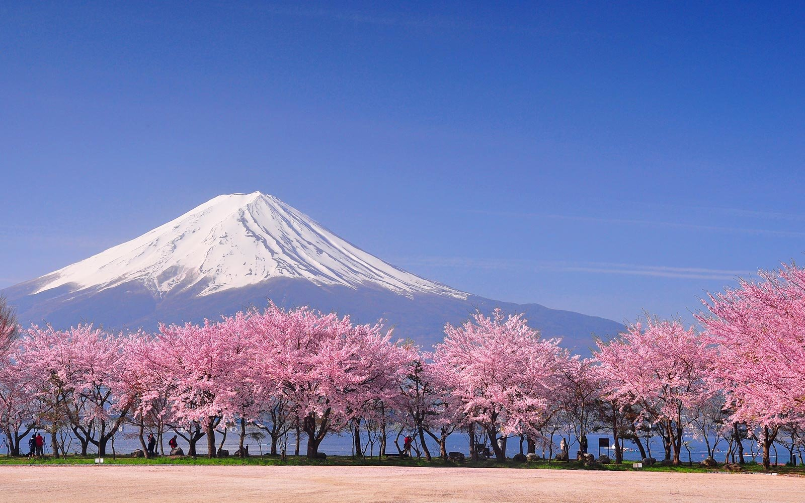lead-cherry-blossoms-mt-fuji-SPRINGSIGHTS0319.jpg