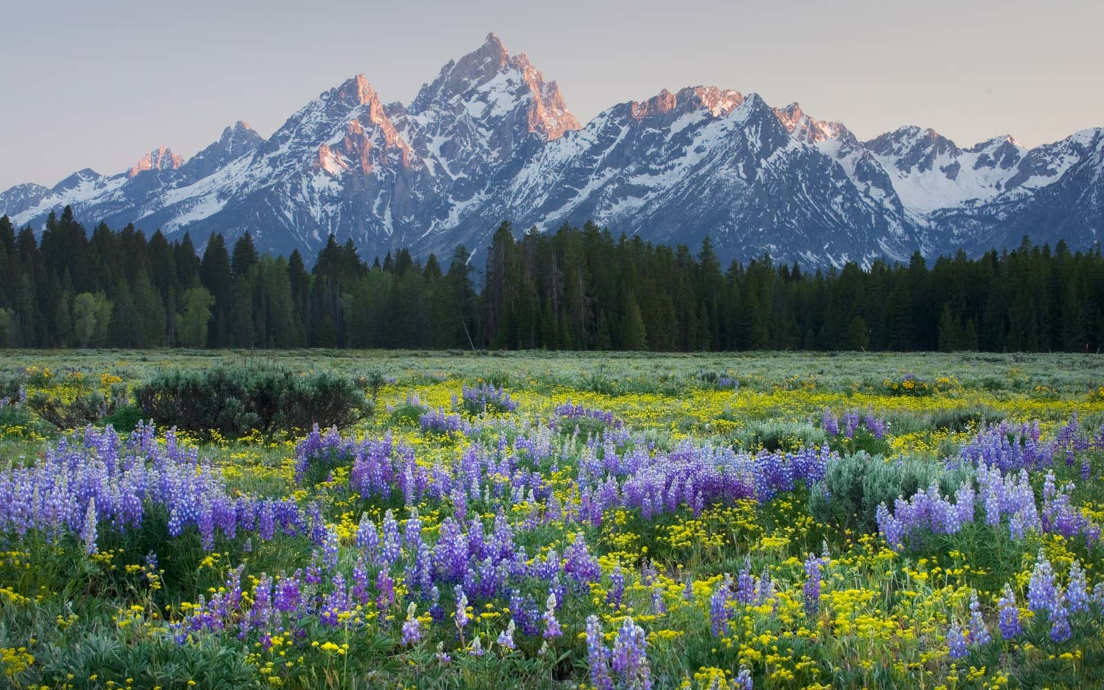 Grand Teton National Park, Spring, Wildflowers