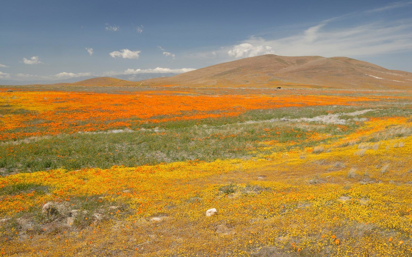 Couple Under Investigation for Landing Helicopter on a Poppy Field