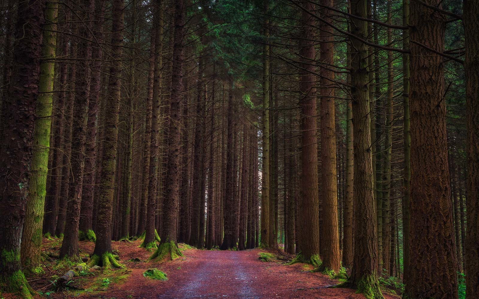The Forests of Winterfell, Tollymore Forest Park, Northern Ireland
