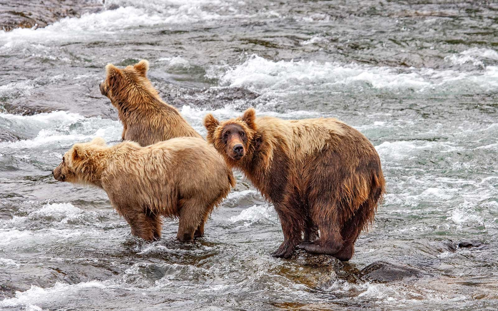 Seeing Bears at Katmai Park in Alaska Just Got a Whole Lot Easier and Safer – for You and the Bears