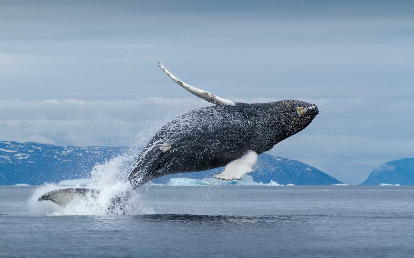 The Best Places to Go Whale Watching This Summer