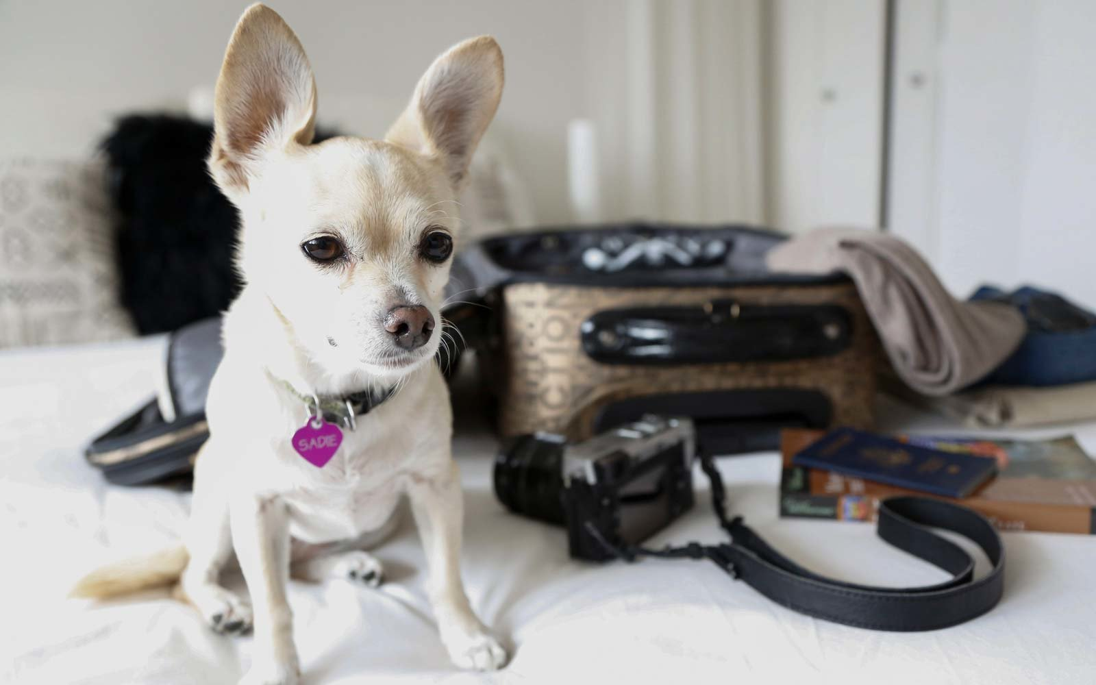 Going on Vacation and Leaving Your Dog at Home? Here's How to Keep Them Calm and Happy