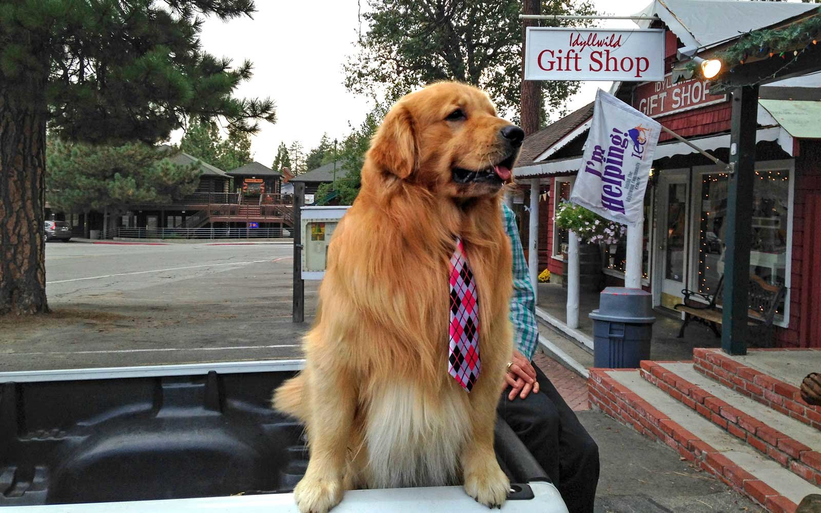 Idyllwild, California's Mayor Max