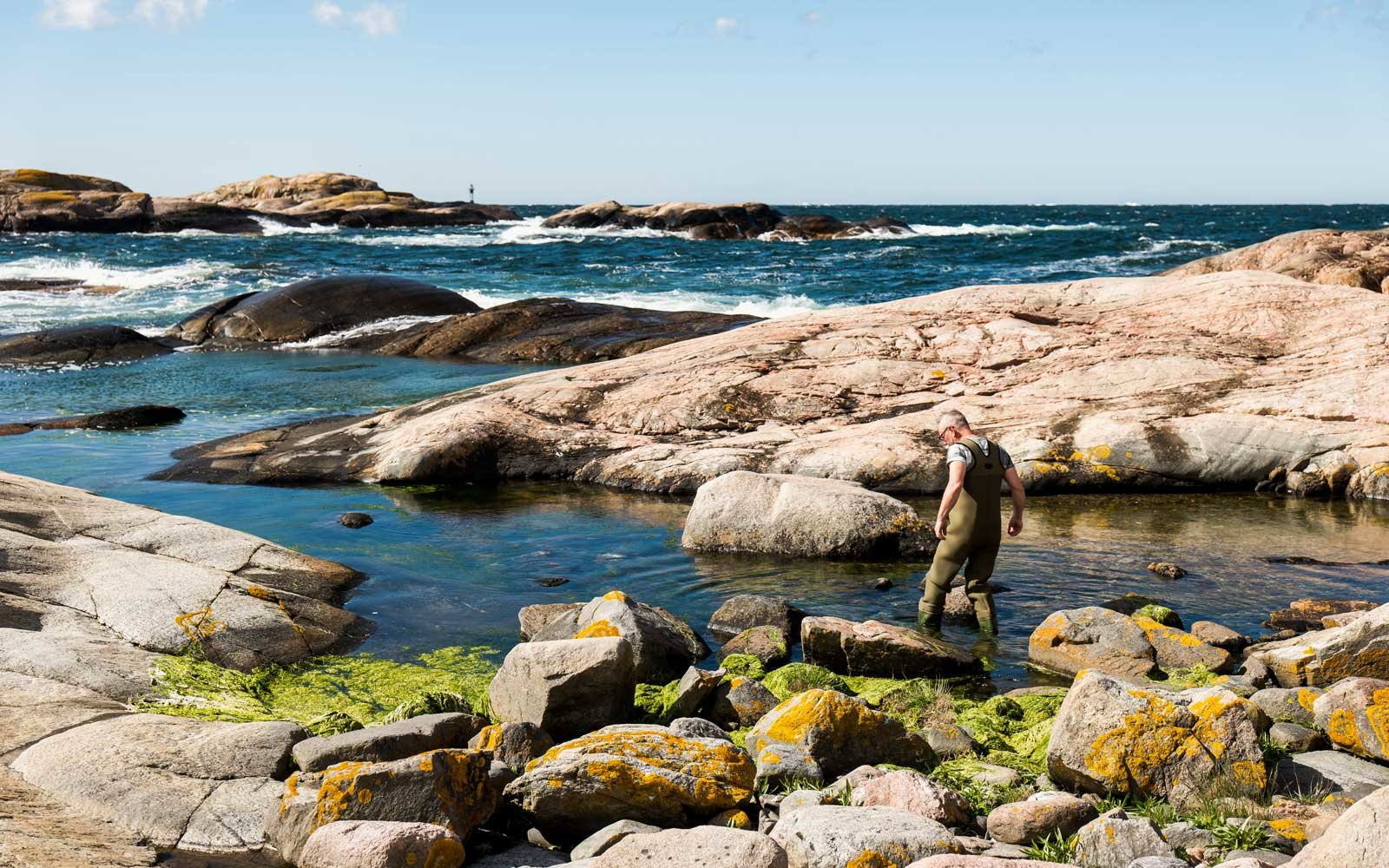 Seaweed and Seafood Safari in Sweden with Airbnb Experiences