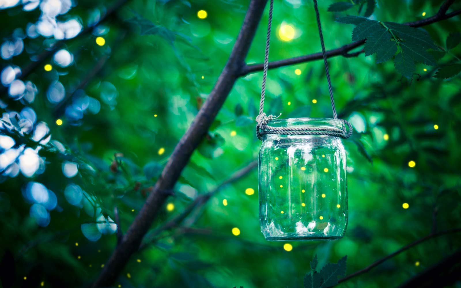 How to Make Your Backyard Firefly-friendly