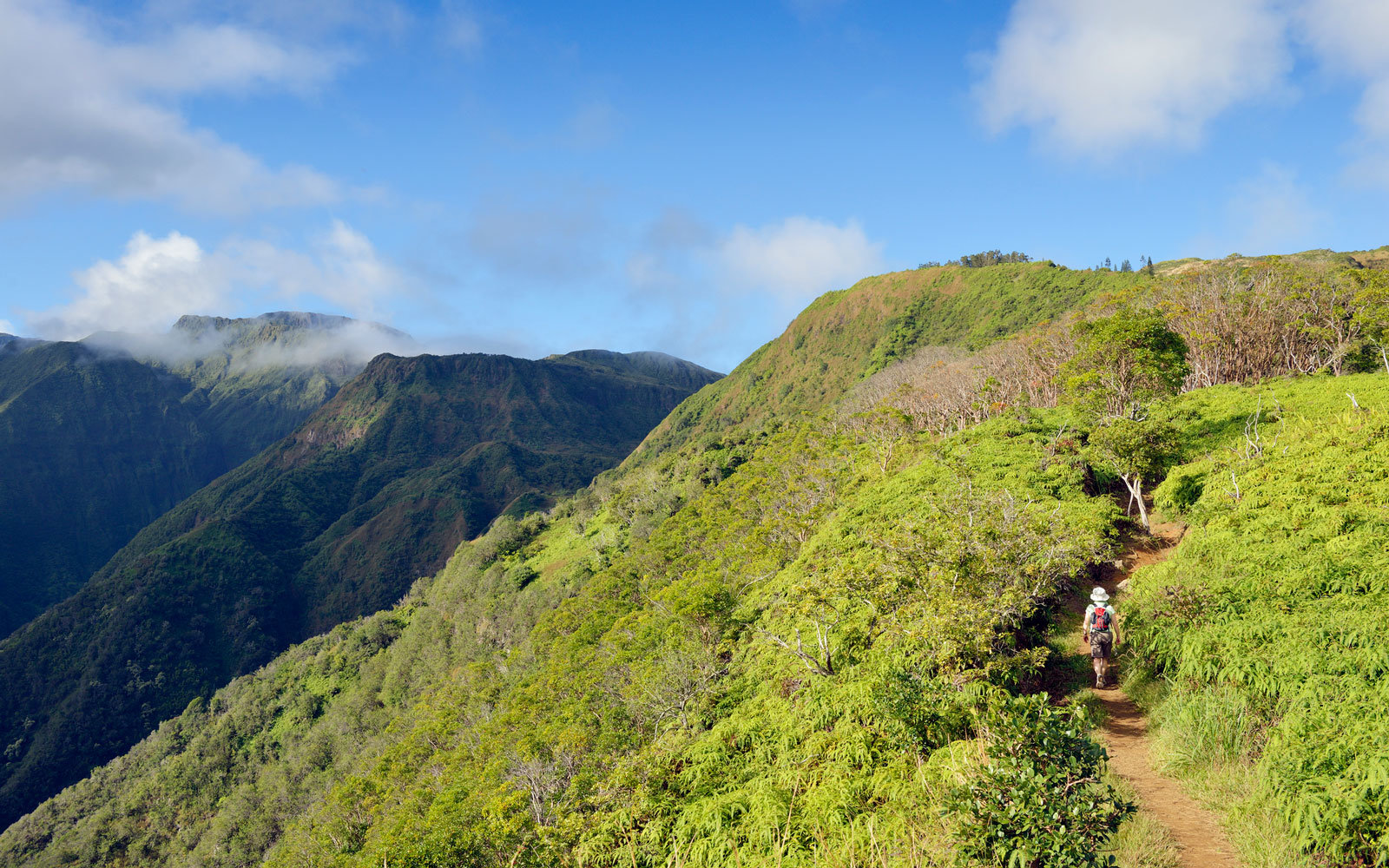 The Best Maui Hikes for Stunning Views and Spectacular Wildlife