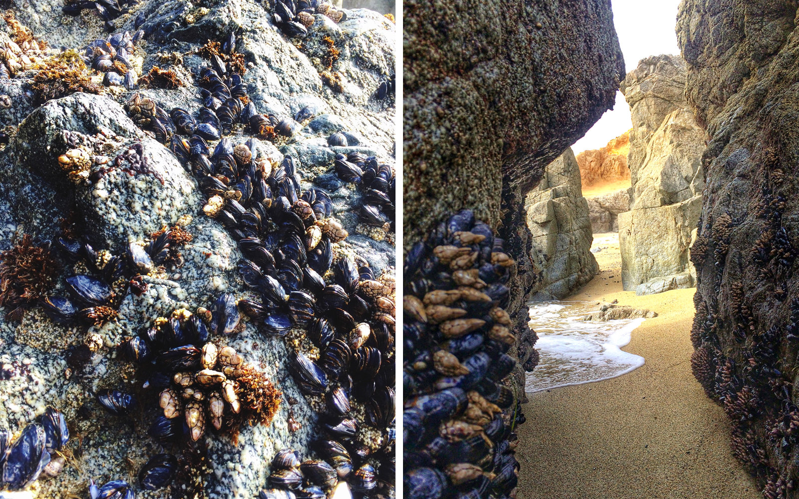 Mussels at Bodega Bay in California