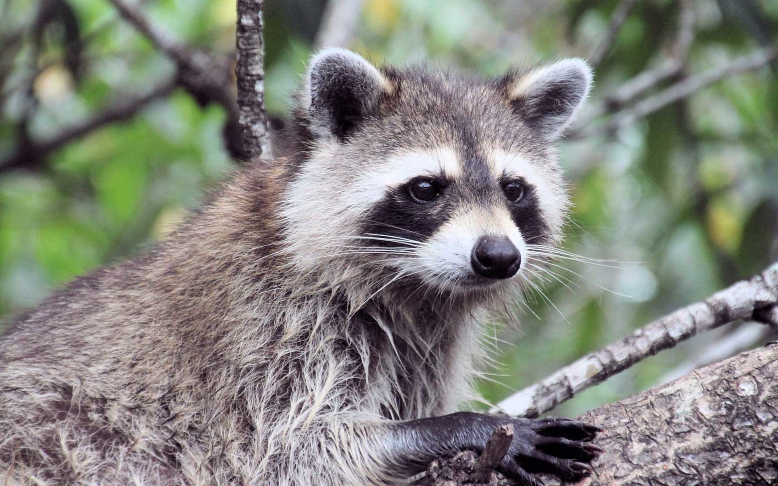 Florida Department of Health Issues Rabies Warning for Disney World