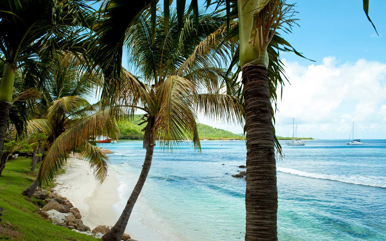 Beach In Mustique Island, St Vincent And The Grenadines, West Indies