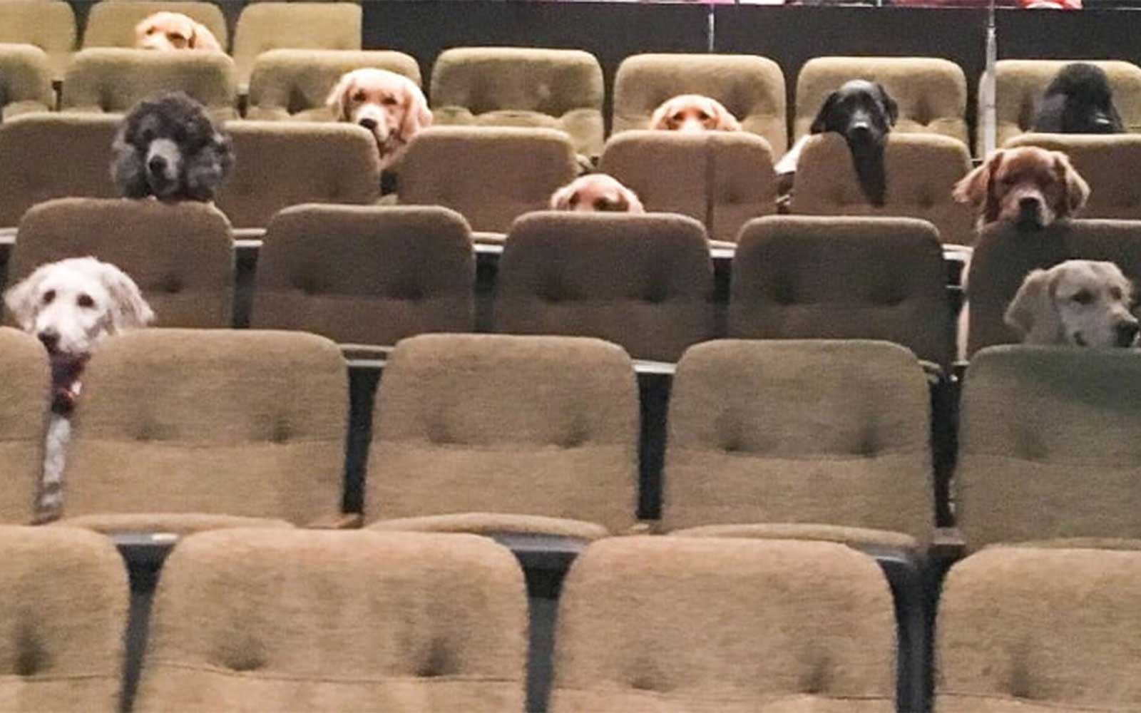 K-9 Country Inn service dogs sitting in a theatre