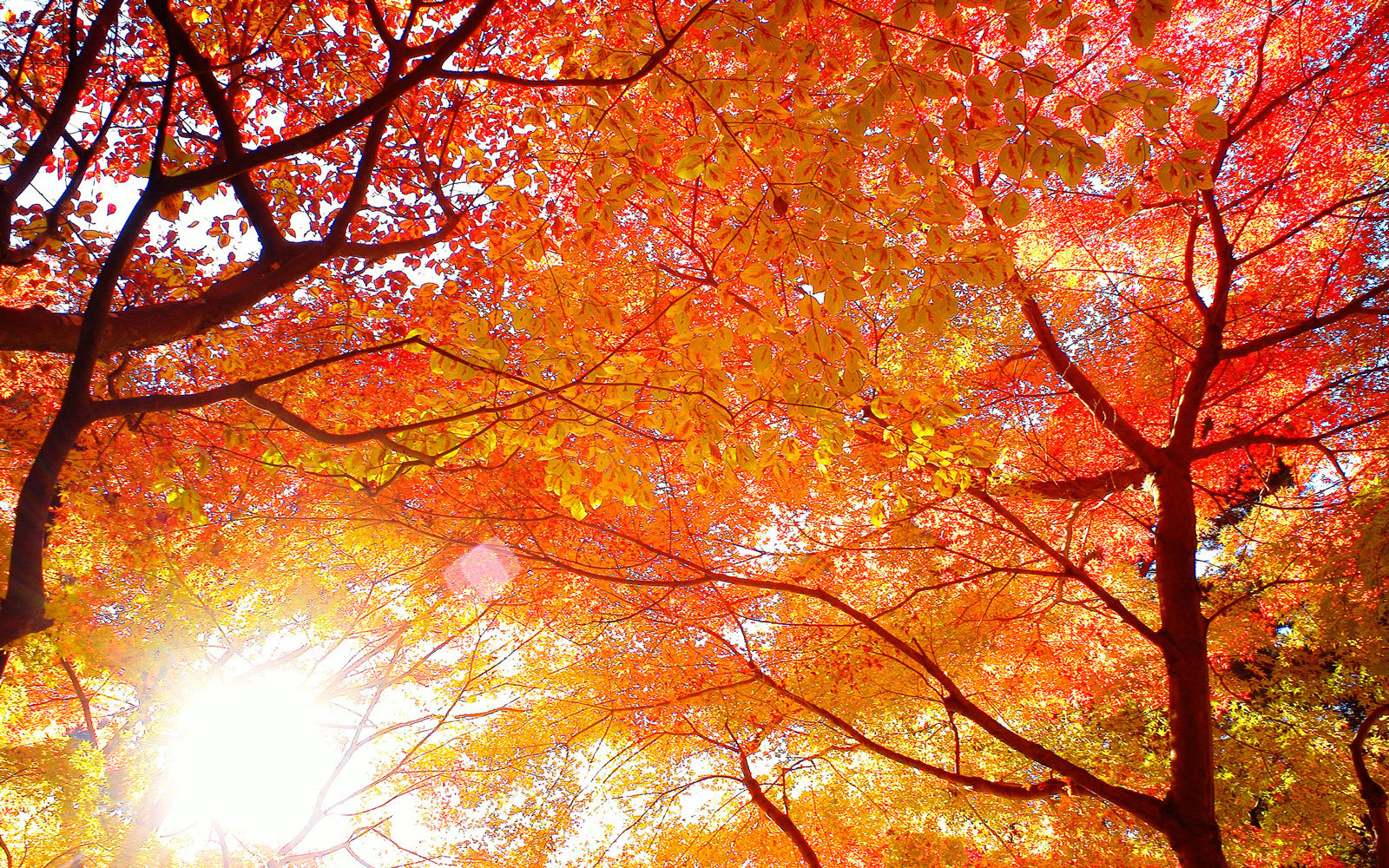 Our obsession with fall foliage can be traced back 1,200 years