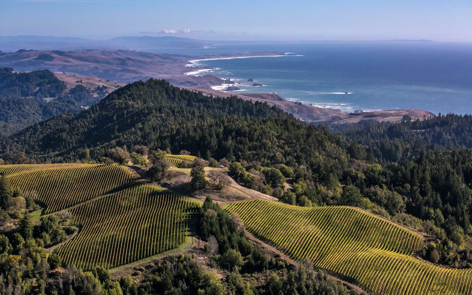 Fort Ross Vineyard & Winery overlooks the Pacific Ocean near Jenner, California