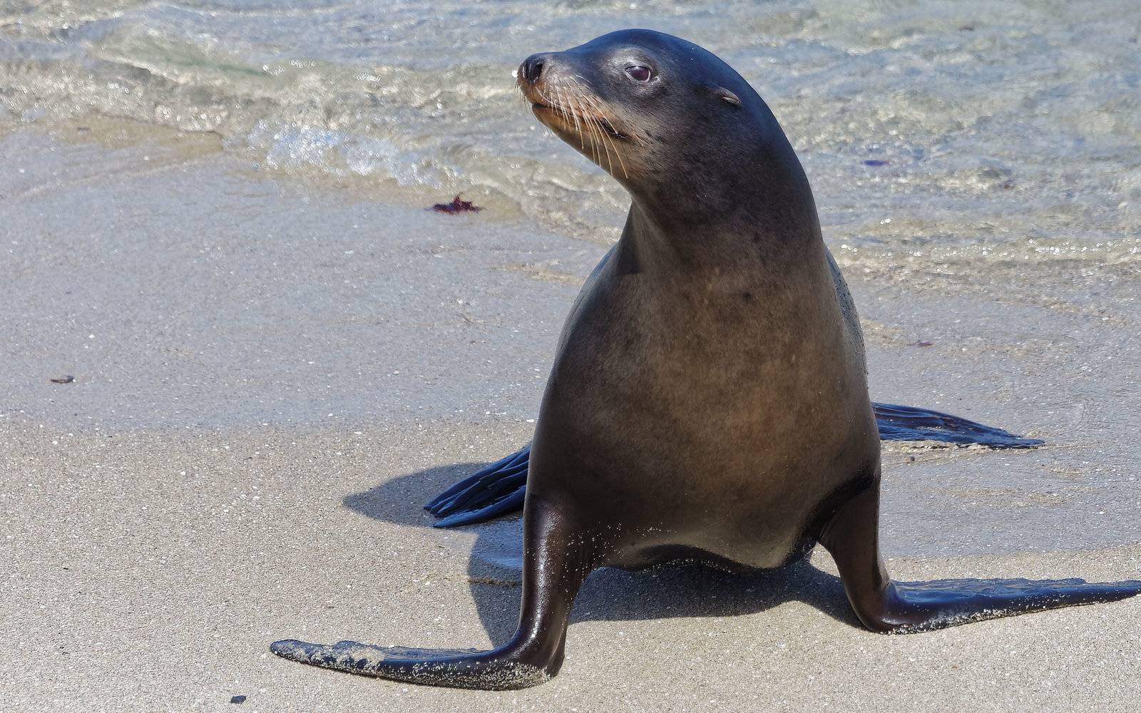 A sea lion went for a swim in a hotel pool and we can't get over how cute the video is