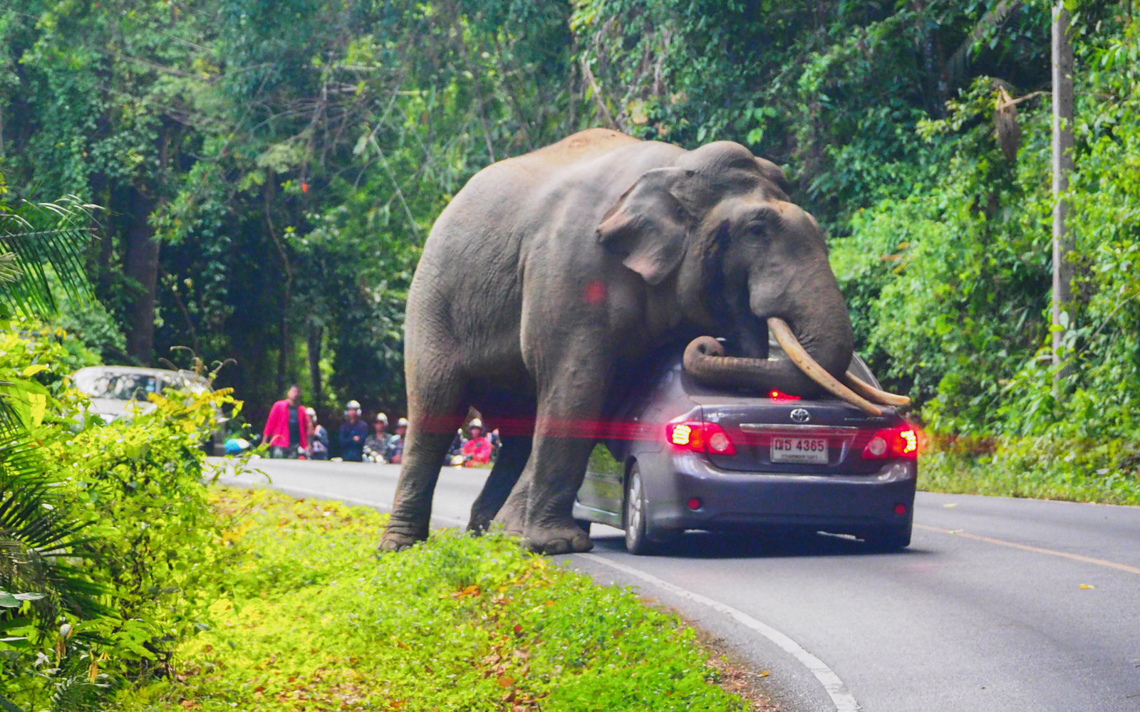 Elephant at national park in Thailand