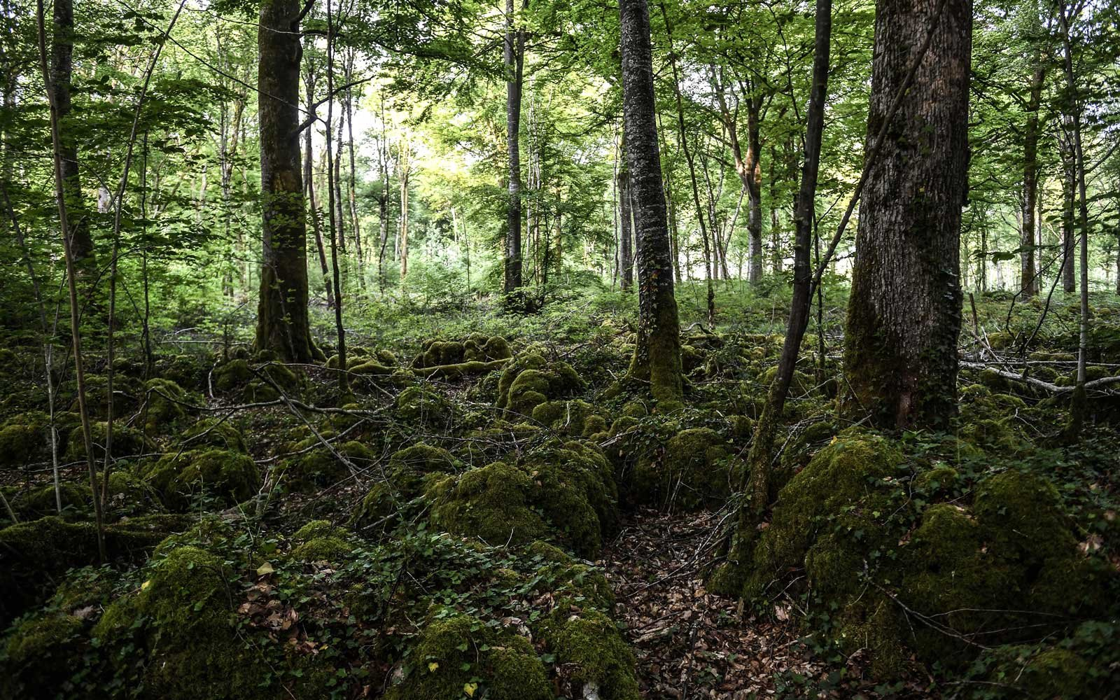 A picture taken on May 23, 2017 shows a view of the future National Park of Champagne and Bourgogne forests near Chatillon-sur-Seine.