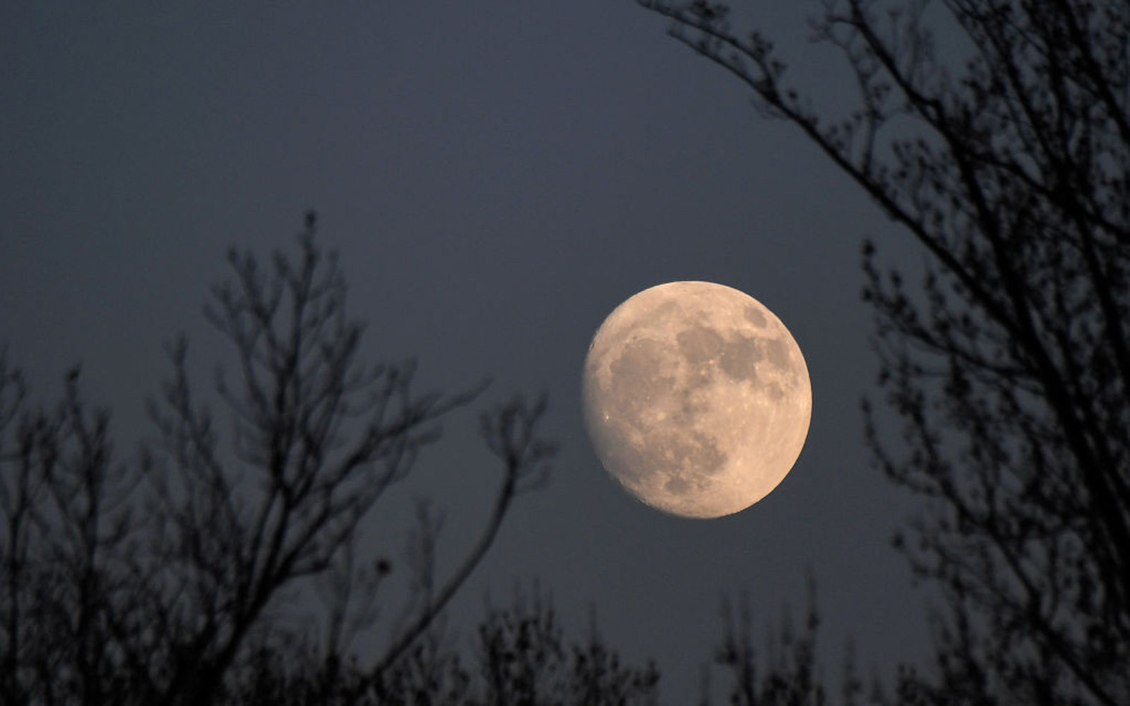 This week's 'Full Cold Moon' is the final full moon of 2019 — here's how to see it