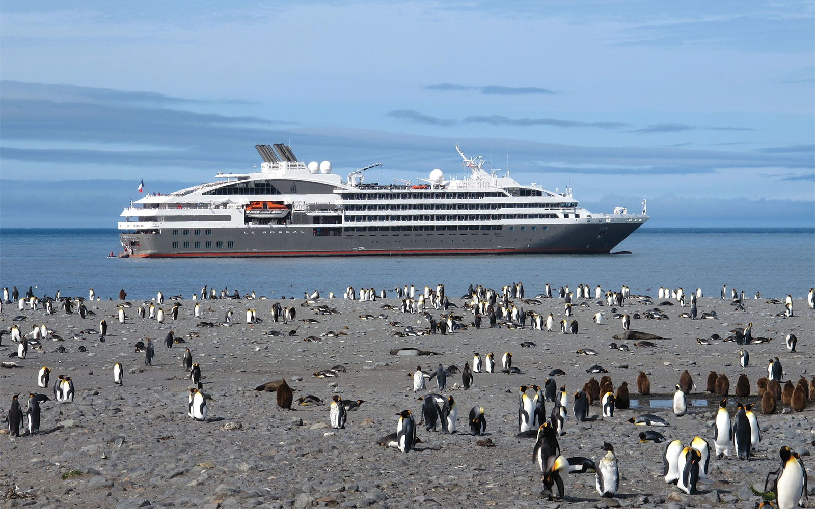 Creatures and Comforts on an Antarctica Cruise