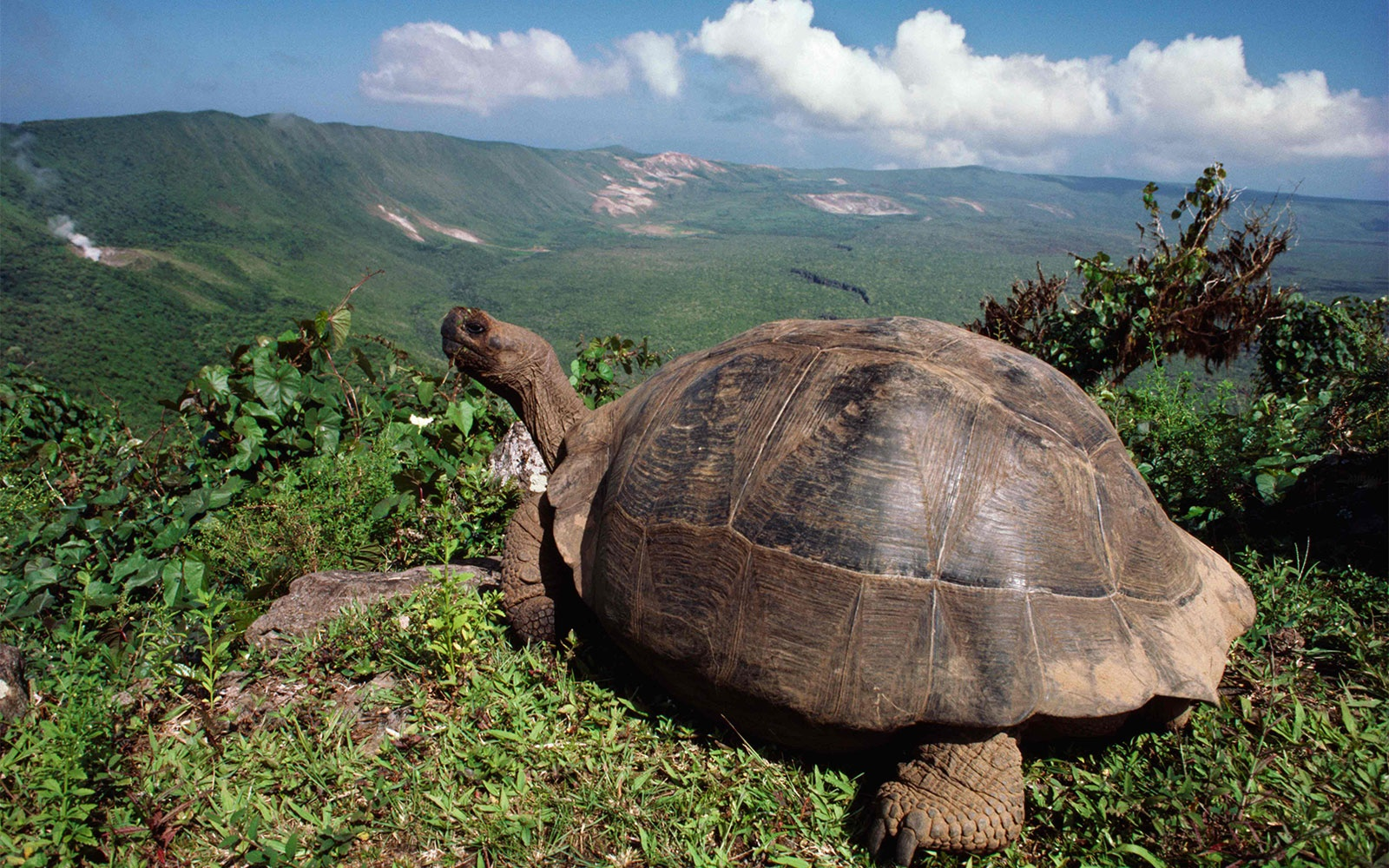 Wildlife Expeditions in the Galapagos