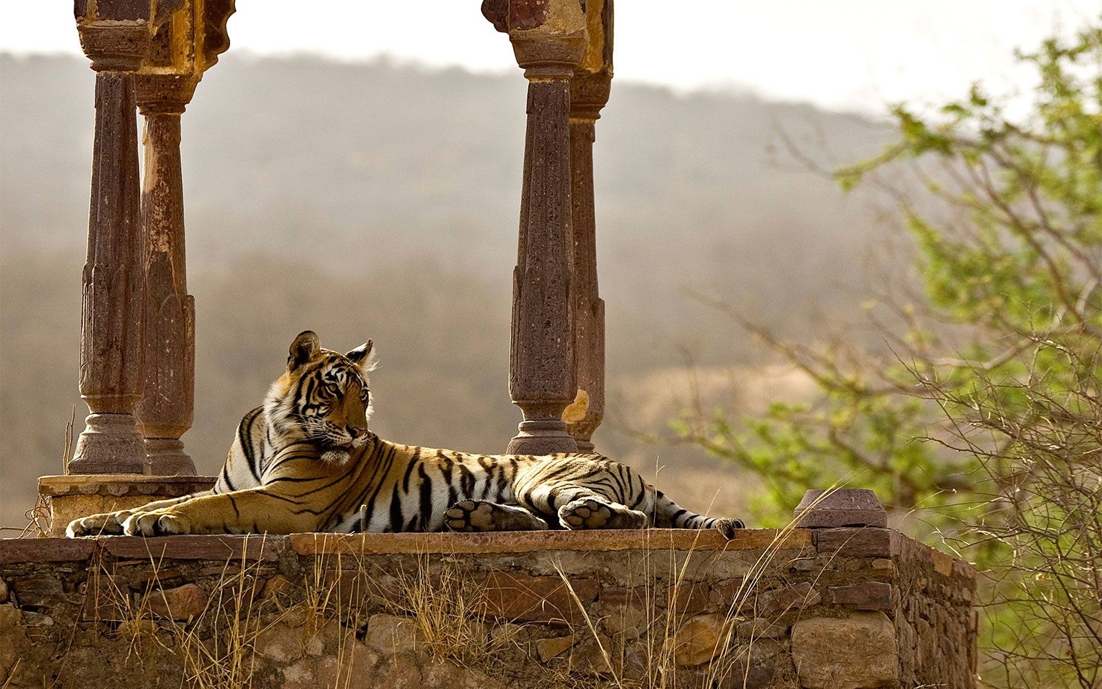 Royal Treatment in Rajasthan
