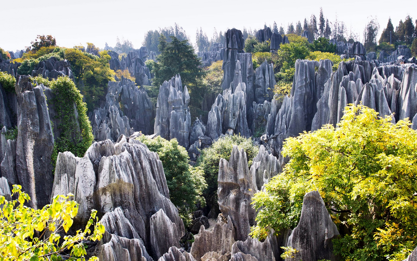 World's Strangest Natural Wonders