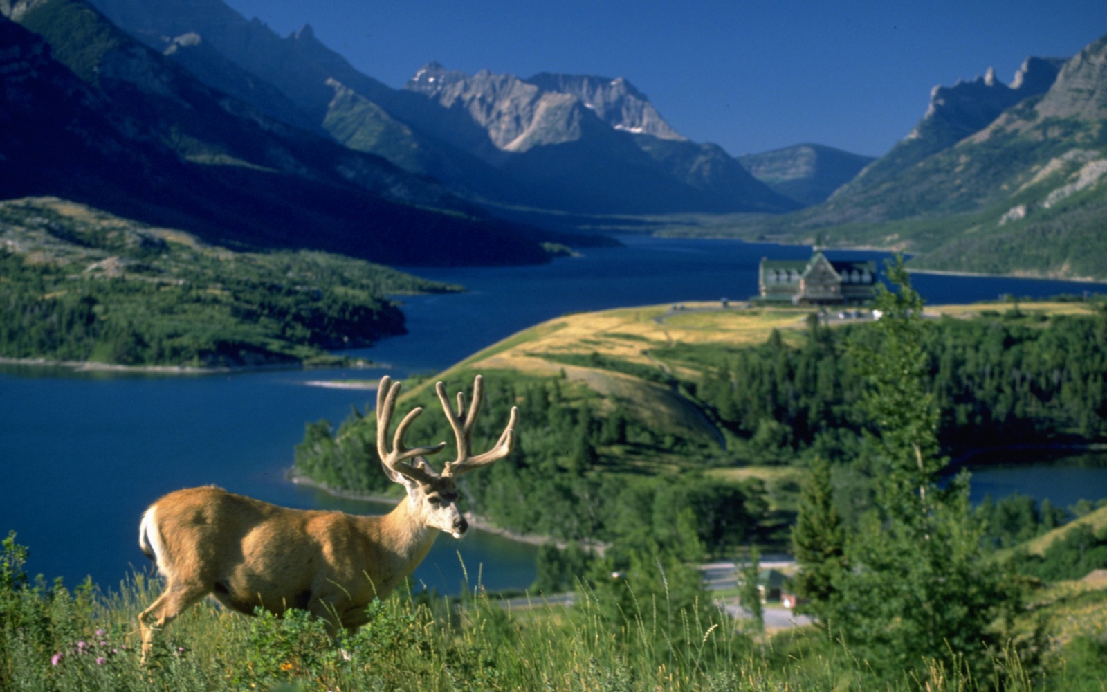 Waterton Glacier Suites, Waterton Lakes National Park, Alberta, Canada