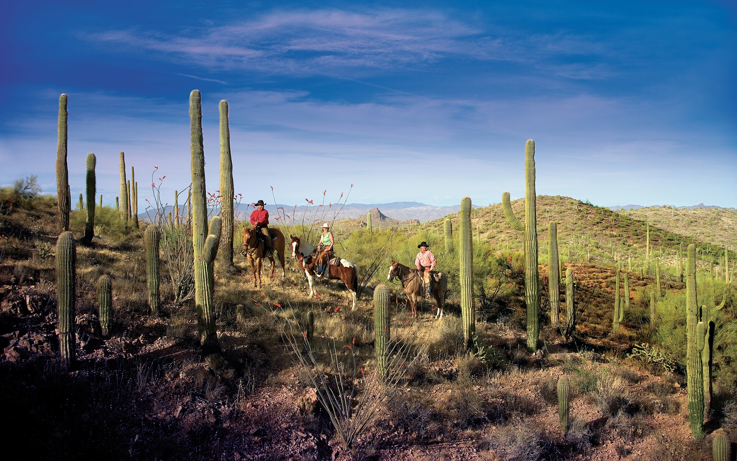 horseback riding in the desert in Rancho de los Caballeros, AZ