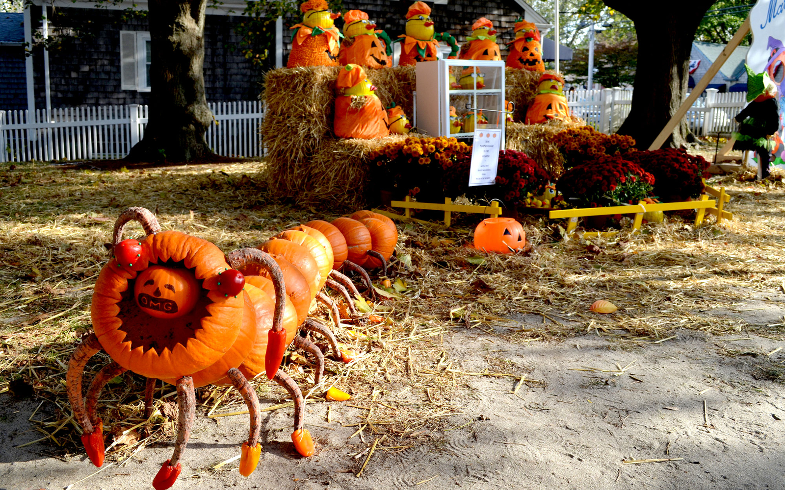 holloween pumpkin carvings in Chatham, Massachusetts