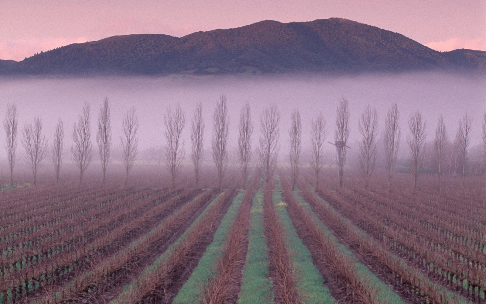 The Napa and Sonoma Valleys new year's eve destinations