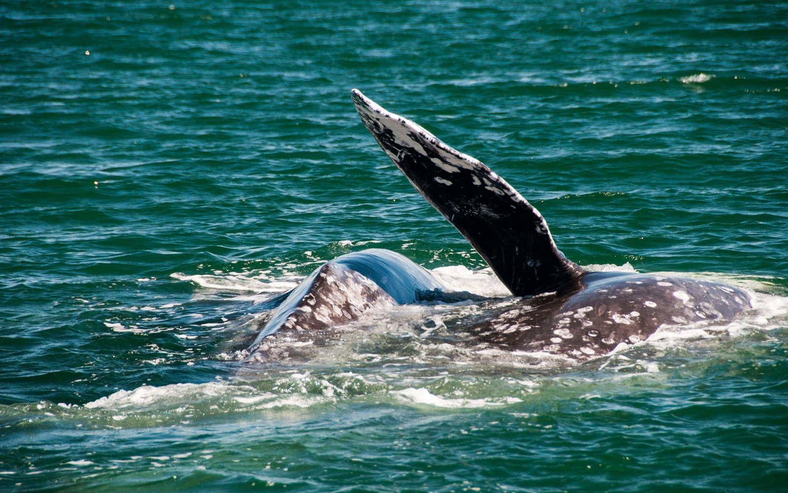 201402-w-spring-weekend-getaway-ideas-gray-whales-california