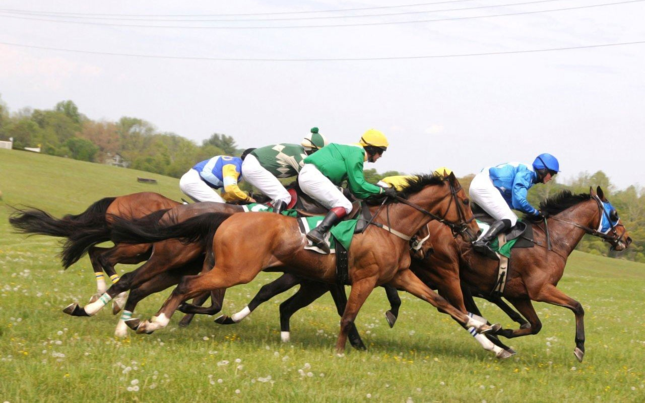 Horse Racing in Middleburg, VA
