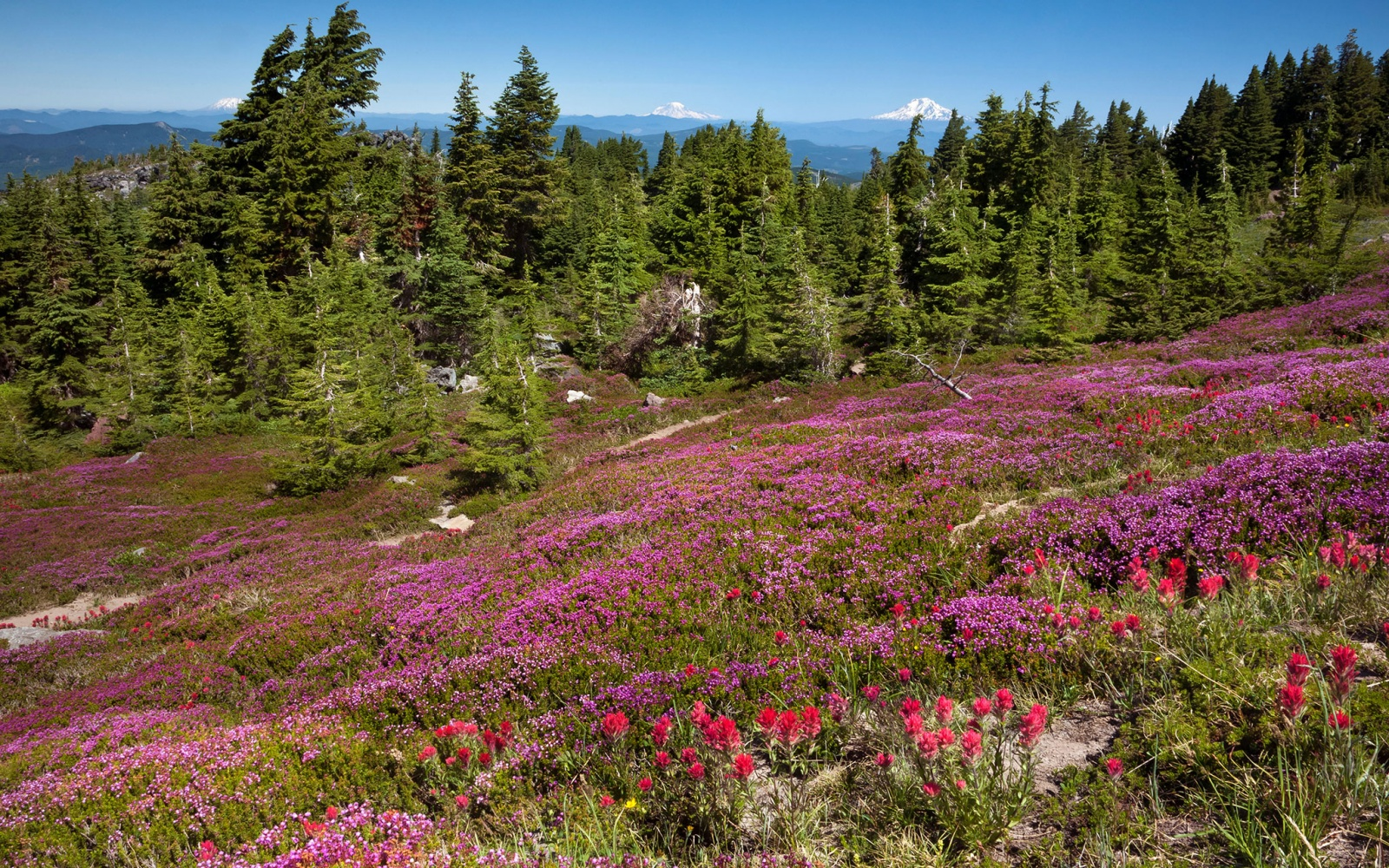 Mount Hood Wildflower Walks, OR