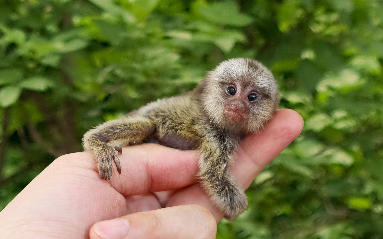 Best Places To See Baby Animals