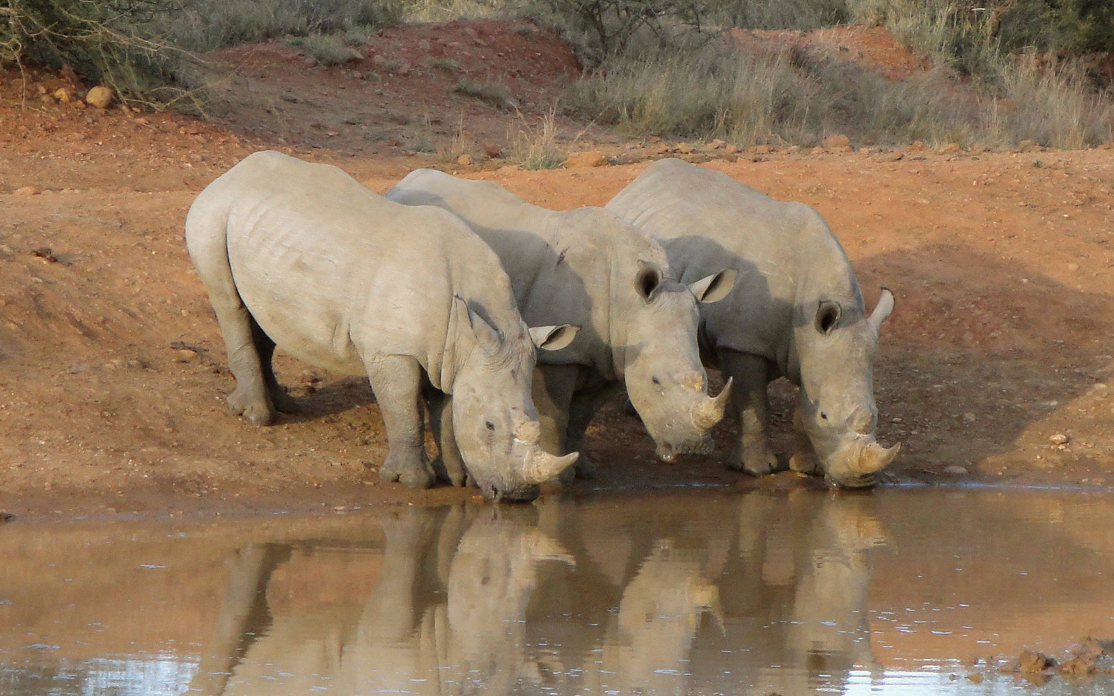 Take a Selfie, Help Save a Rhino