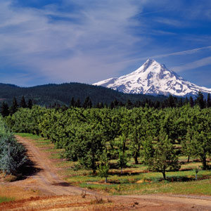 2012-wg-seattle-wildflower-walks-mount-hood