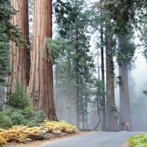 201205-wg-los-angeles-exploring-sequoia-national-park