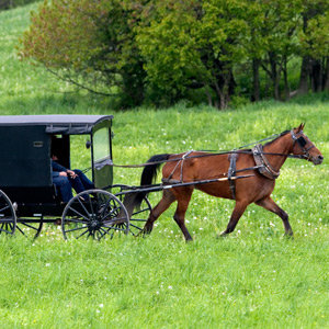 201205-wg-new-york-buggy-riding-amish-country