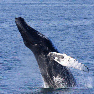 201205-wg-new-york-whale-watching-provincetown