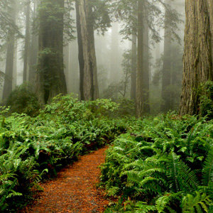 201205-wg-san-francisco-tour-redwoods-in-humboldt-county