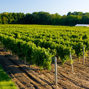 201208-wg-boston-finger-lakes-history-cayuga-wine-trail